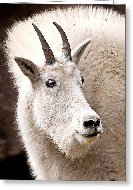 Mountain Goat Greeting Card by Jean Noren
