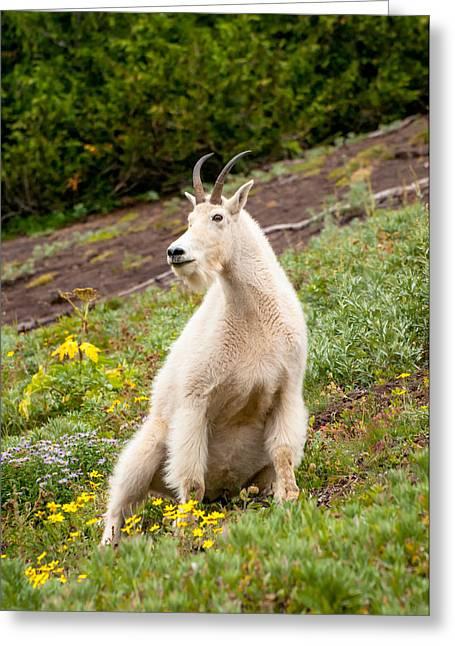Animalia Greeting Cards - Mountain Goat Greeting Card by Rich Leighton