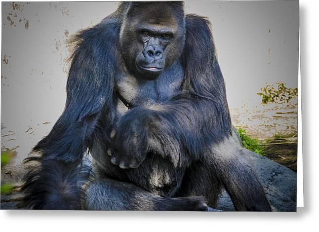 Audubon Zoo Greeting Cards - Mountain Gorilla Greeting Card by Jon Stephenson