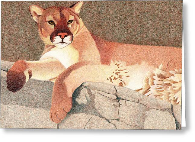 Recently Sold -  - Ledge Greeting Cards - Mountain Lion Greeting Card by Dan Miller