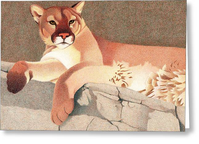 Ledge Drawings Greeting Cards - Mountain Lion Greeting Card by Dan Miller