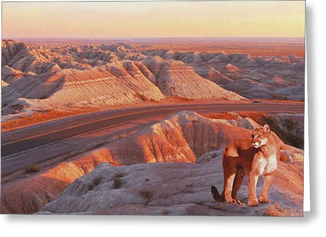 Mountain Road Greeting Cards - Mountain Lion In The Badlands, Sd Greeting Card by Ron Sanford & Mike Agliolo