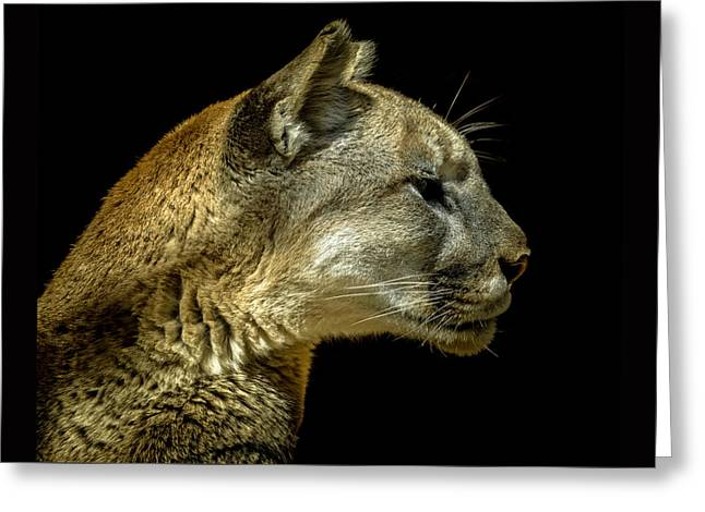 Lions Greeting Cards - Mountain Lion Portrait Greeting Card by Ernie Echols