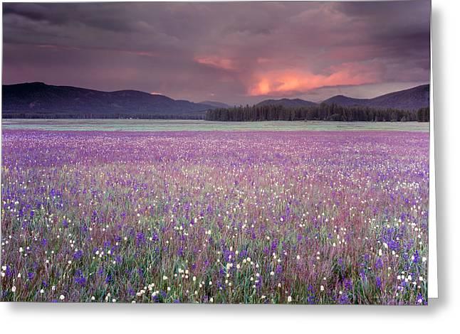 Mountain Meadow Purple Greeting Card by Leland D Howard