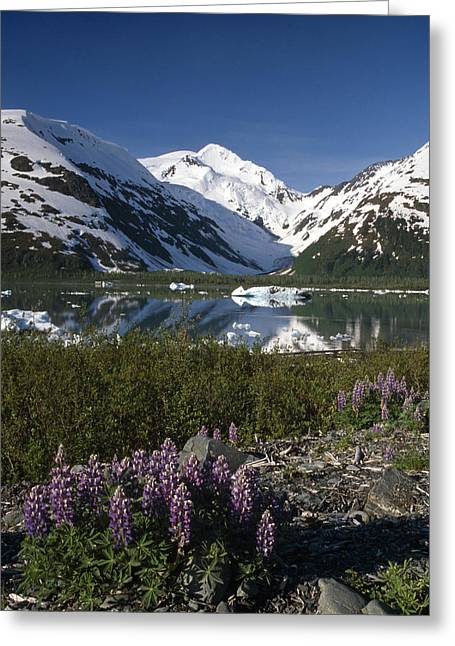 Portage Greeting Cards - Mountain Reflecting In Portage Lake Greeting Card by Jeff Schultz