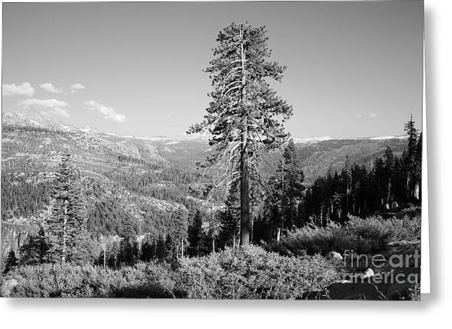 Shower Curtain Greeting Cards - Mountain Scenery Yosemite NP No16 Greeting Card by  ILONA ANITA TIGGES - GOETZE  ART and Photography