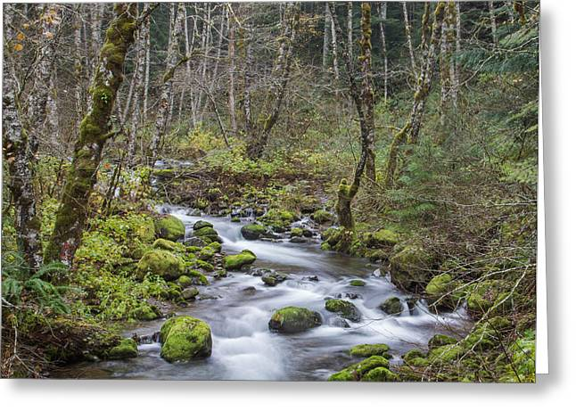 Moss-covered Greeting Cards - Mountain Stream Greeting Card by Angie Vogel
