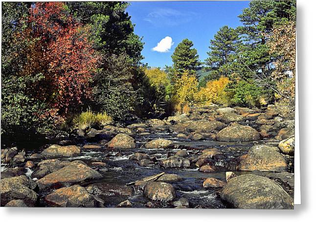 Stream Greeting Cards - Mountain Stream Autumn Greeting Card by Sally Weigand