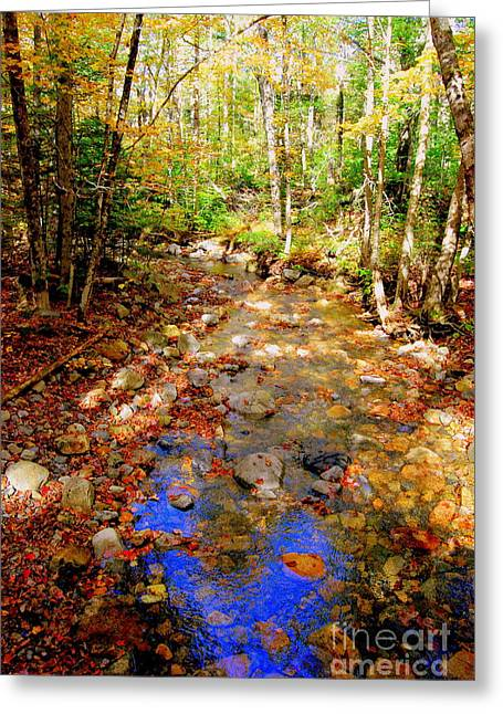 Tree Leaf On Water Greeting Cards - Mountain Stream Covered With Fall Leaves Greeting Card by Eunice Miller