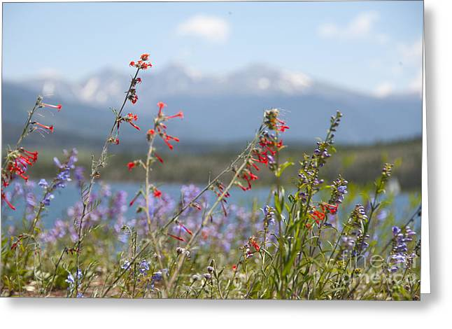 Mountain Wildflowers Greeting Card by Juli Scalzi