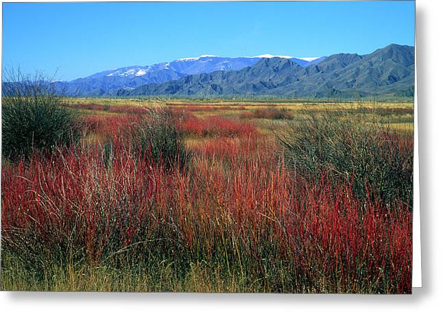Green Grass Greeting Cards - Mountainous Landscape Greeting Card by Anonymous