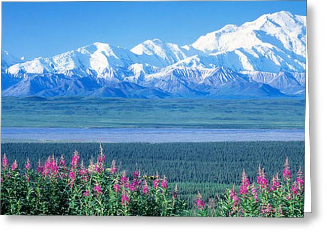 Denali National Park Greeting Cards - Mountains & Lake Denali National Park Greeting Card by Panoramic Images