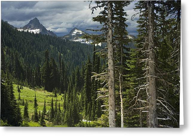 Mountainside Art Greeting Cards - Mountains and Forest in British Columbia Greeting Card by Randall Nyhof