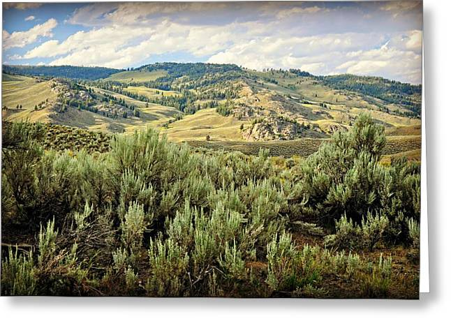 Mountains North Of The Lamar Greeting Card by Marty Koch
