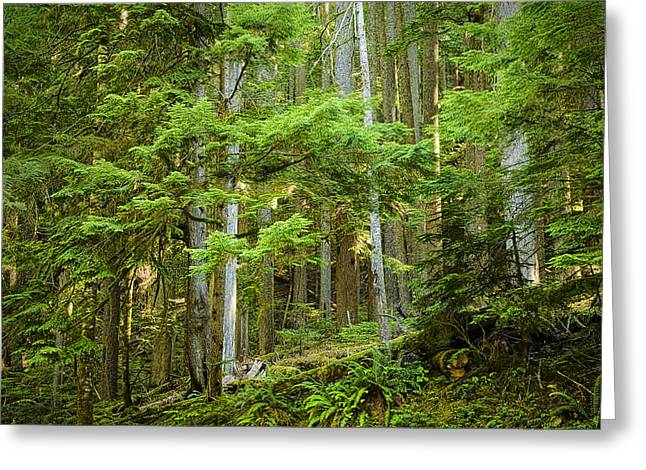 Mountainside Art Greeting Cards - Mountainside Forest in British Columbia Greeting Card by Randall Nyhof