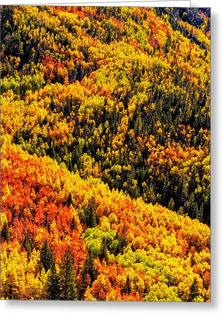 Scenic Drive Greeting Cards - Mountainside of Color Greeting Card by Teri Virbickis