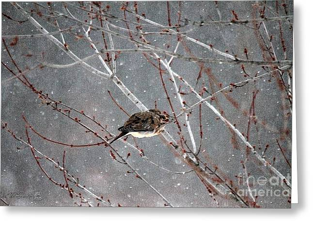 Mccombie Greeting Cards - Mourning Dove Asleep in Snowfall Greeting Card by J McCombie