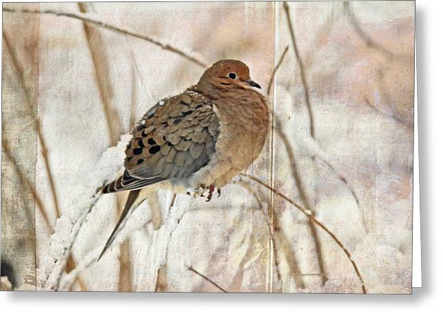 Mother Nature Greeting Cards - Mourning Dove - Sing No Sad Song for Me #1 Greeting Card by Mother Nature