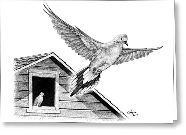 Barn Pen And Ink Greeting Cards - Mourning Doves Greeting Card by Colin Hayes