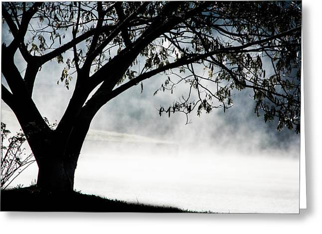 Reflection On Calm Pond Greeting Cards - Mourning Tree Greeting Card by Parker Cunningham