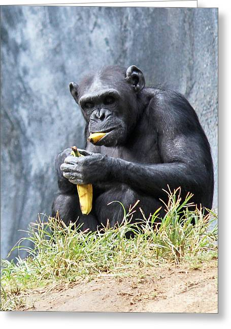 Bananas.ape Greeting Cards - Mouth Full Greeting Card by Cheryl Del Toro