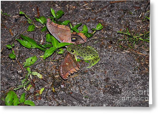 Tree Frog Greeting Cards - Mouthful of Moth Greeting Card by Al Powell Photography USA