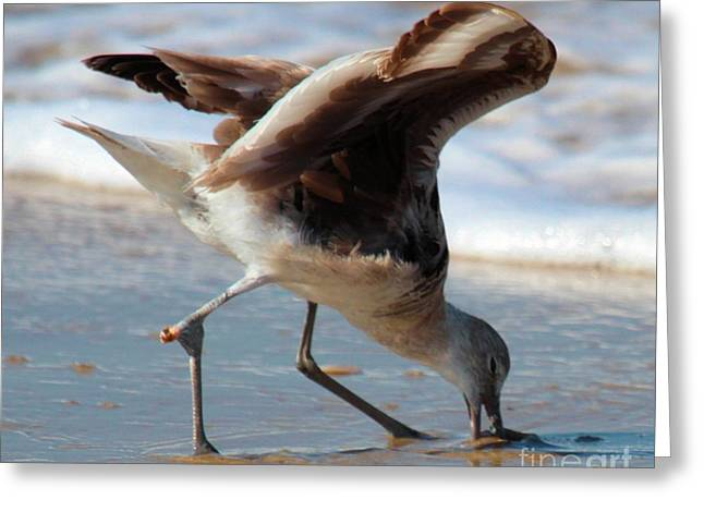 Cape Hatteras National Seashore Greeting Cards - Mouthful Of Sand Greeting Card by Adam Jewell