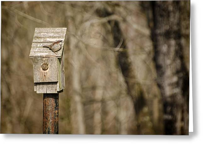Sparrow Greeting Cards - Moving Day Greeting Card by Heather Applegate