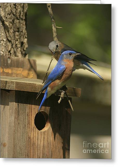 Couple With House Greeting Cards - Mr. and Mrs. Bluebird Greeting Card by Sandra Clark