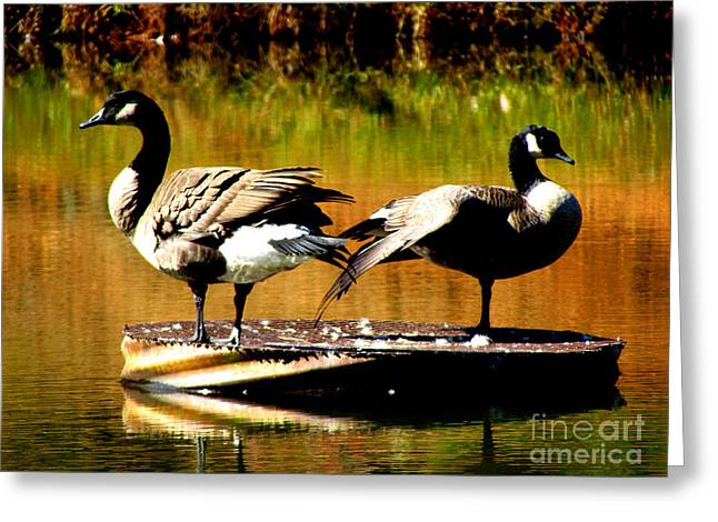 Water Fowl Greeting Cards - Mr. and Mrs. Greeting Card by Gardening Perfection
