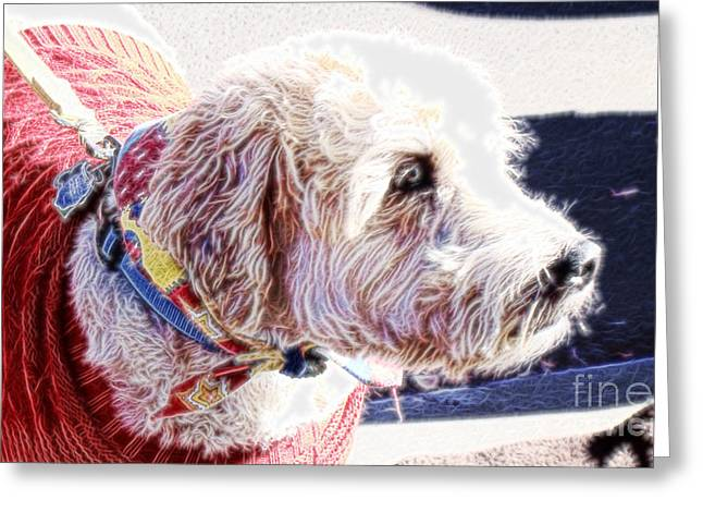 Dog Sweaters Greeting Cards - Mr Bailey Greeting Card by Beverly Guilliams