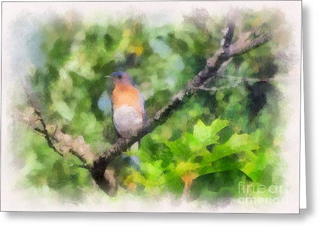 Bluebird Posters Greeting Cards - Mr. Bluebird  Greeting Card by Kerri Farley