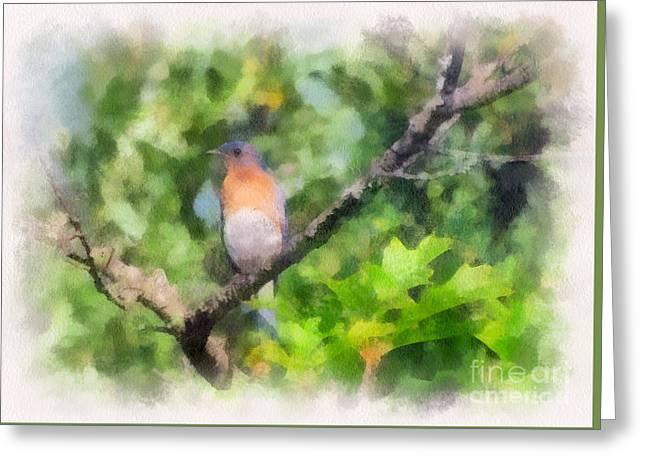 Bluebird Posters Greeting Cards - Mr. Bluebird  Greeting Card by Kerri Farley