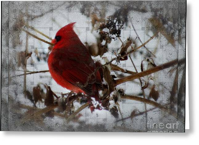 Male Cardinals In Snow Greeting Cards - Mr Cardinal In Time Out Greeting Card by Brenda Bostic