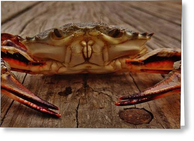Kite Greeting Cards - Mr Crab 3 11/06 Greeting Card by Mark Lemmon