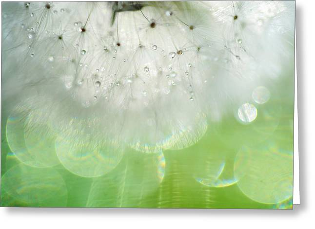 Wishes Greeting Cards - Mr. Dandelion. Inner Light Greeting Card by Jenny Rainbow