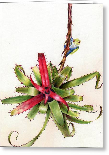 Bromeliad Neoregelia Greeting Cards - Mr. Frog Surveys the Morning Greeting Card by Penrith Goff