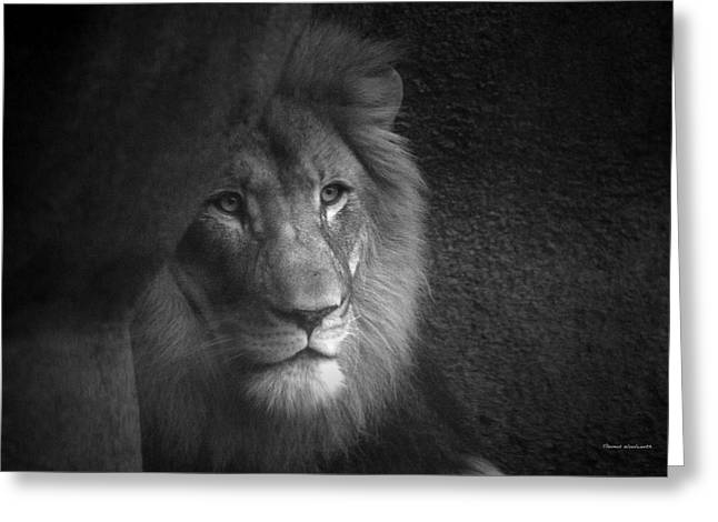 Lioness Greeting Cards - Mr Lion in Black and White Greeting Card by Thomas Woolworth