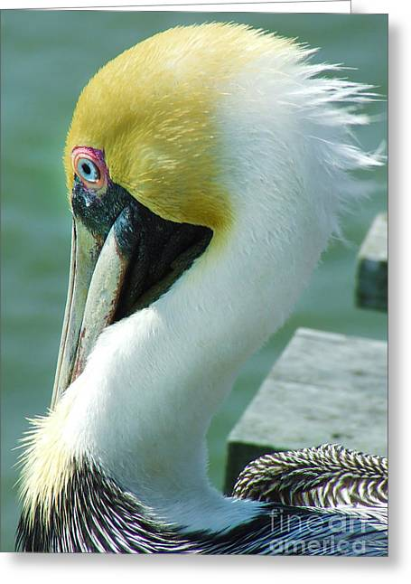 Dogwood Silhouette Greeting Cards - Mr Pelican Greeting Card by Stuart Mcdaniel