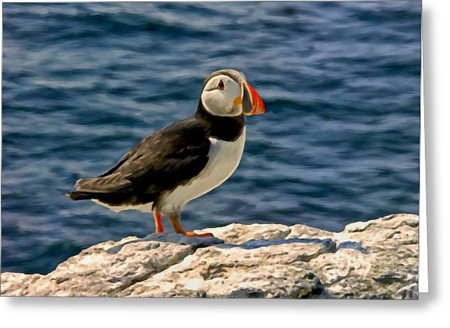 Mr. Puffin Greeting Card by Michael Pickett