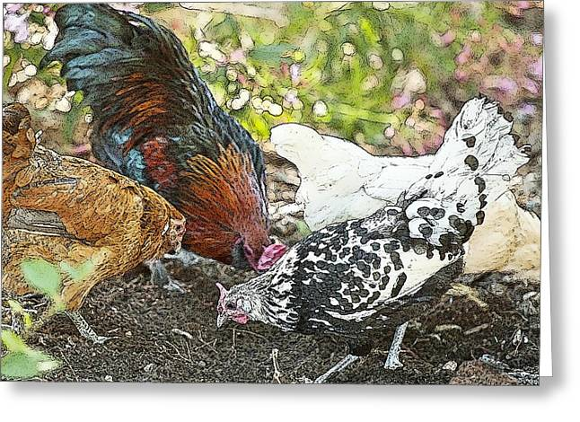 Fluffy Chickens Greeting Cards - Mr. Rooster and All the Chickens Scratching for a Snack Greeting Card by Artist and Photographer Laura Wrede