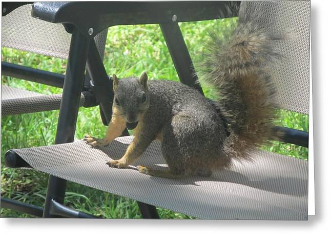 Lawn Chair Greeting Cards - Mr. Squirrel Relaxing Greeting Card by Donna Wilson