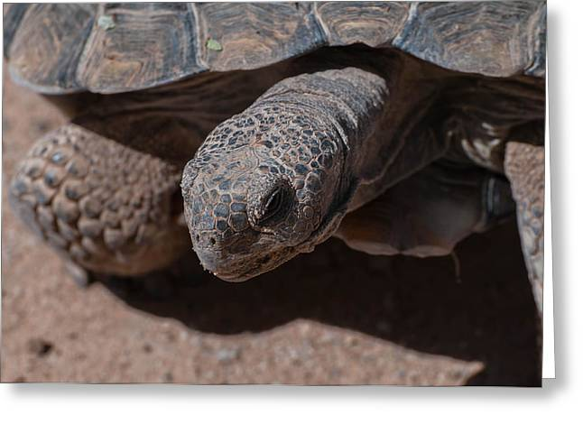 Tron Photographs Greeting Cards - Mr. Tron - The Desert Tortoise Greeting Card by Martina Thompson
