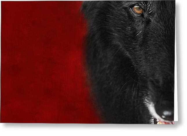 Sheepdog Greeting Cards - Belgian Shepherd Art 1 Greeting Card by Wolf Shadow  Photography