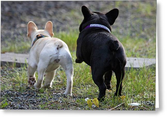 Tap On Photo Greeting Cards - Ms. Quiggly and Buddy French Bulldogs Greeting Card by Tap  On Photo
