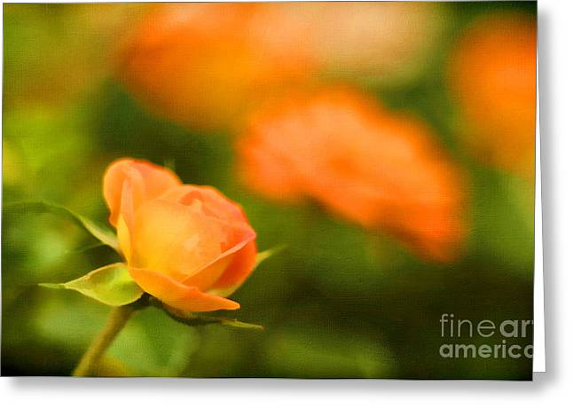 Multiple Sclerosis Greeting Cards - MS Rose Greeting Card by Darren Fisher
