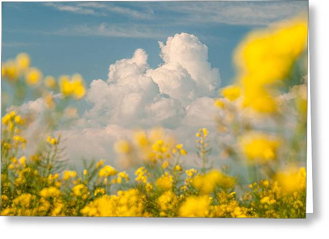 Rape Greeting Cards - Mt Cloud Greeting Card by Davorin Mance