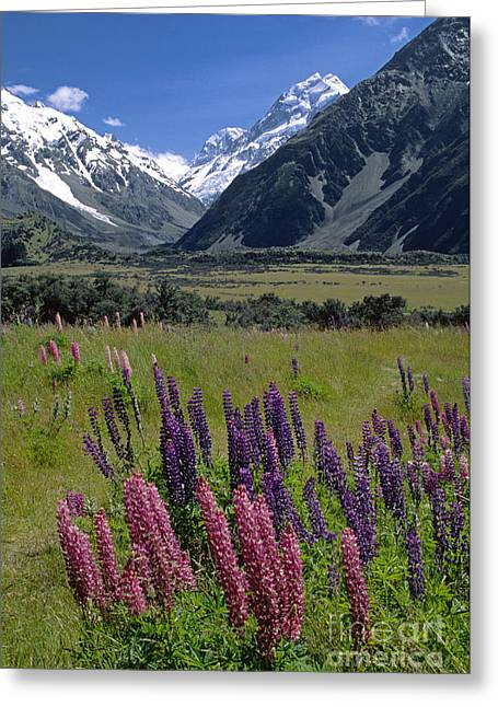 Mt. Massive Greeting Cards - Mt Cook National Park New Zealand Greeting Card by Craig Lovell
