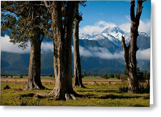 Aotearoa Greeting Cards - Mt Cook through trees Greeting Card by Jenny Setchell