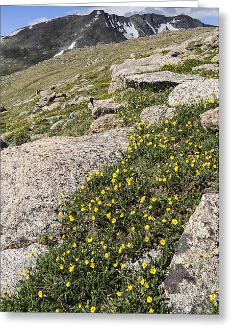 Unique View Greeting Cards - Mt. Evans Wildflowers Greeting Card by Aaron Spong